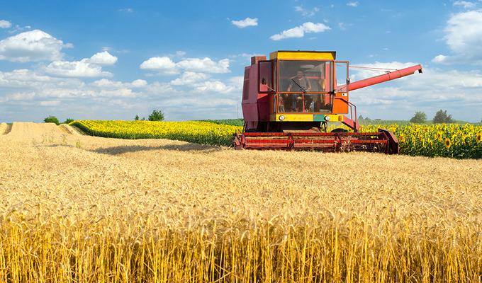 Сбор пшеницы с полей на финишной прямой!
