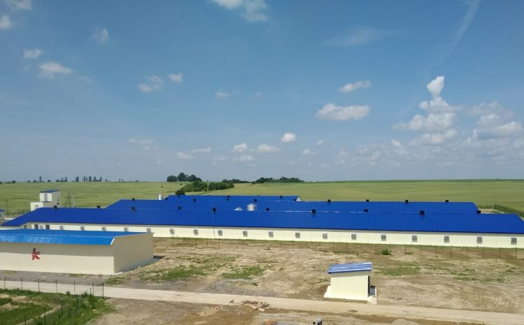 A new poultry farm for raising the parent flock was put into operation at Agidel LLC